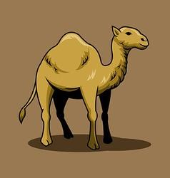 Brown Camel vector