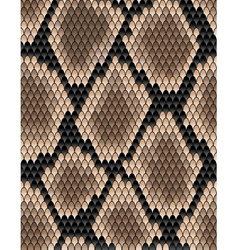 Seamless pattern of snake skin vector image vector image