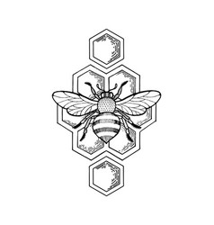 bee and honeycombs engraving style vector image
