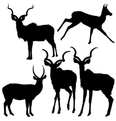 Antelope Silhouettes vector