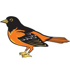 Oriole logo mascot vector