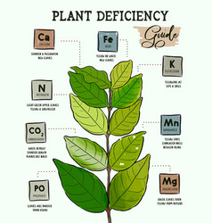 Plant deficiency guide - planting issues vector
