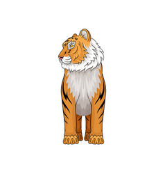 Adult tiger standing isolated on white background vector
