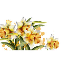 daffodil flowers watercolor spring season vector image