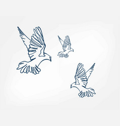 dove line art single line isolated abstract vector image
