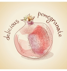 Vintage pomegranate vector