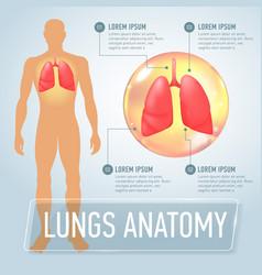 lung modern medical infographics internal organs vector image