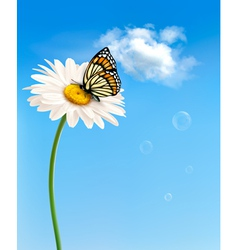 Nature spring daisy flower with butterfly vector