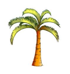 Palm jamaican coconut tropical tree color vector
