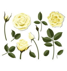 set of yellow rose flower parts vector image vector image
