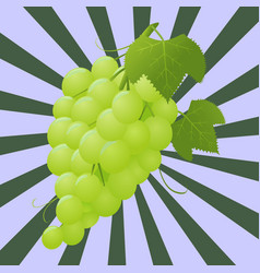 grapes 1 vector image