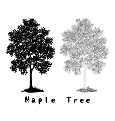Maple Tree Silhouette Contours and Inscriptions vector