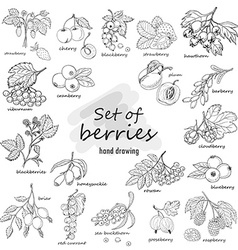 Collection of garden and wild berries in sketch vector