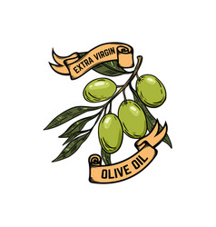 extra virgin olive oil olives on white background vector image