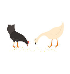 Hen and goose eating food from ground vector