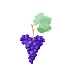 Icon of red ripe grapes on vector