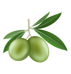 olives icon realistic style vector image
