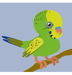 Budgie vector image vector image