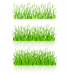 grass illustration vector image