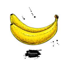 banana drawing isolated hand drawn object vector image vector image
