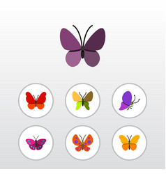 Flat butterfly set of archippus violet wing vector