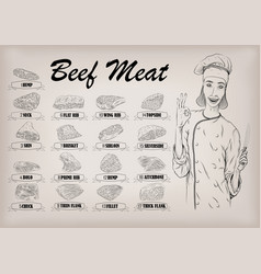 beef cow carcass cut parts info graphics poster vector image