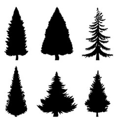 black silhouettes 6 pine trees on white vector image