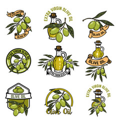 set of olive oil emblems olive branch vector image