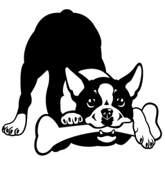 boston terrier black and white vector image vector image