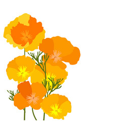 california poppies vector image