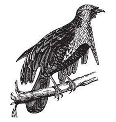 Superb bird paradise vintage vector