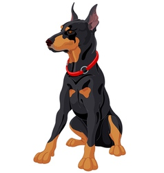 Doberman vector image