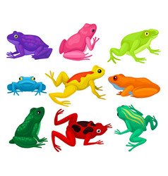 Flat set of cartoon frogs toads with short vector