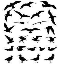 Gulls silhouette vector