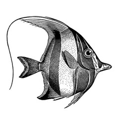 High detail moorish idol fish engraving vector