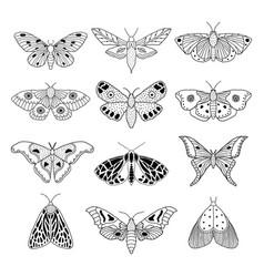 set hand drawn moths vector image