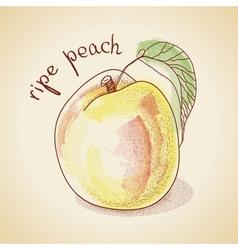 Vintage peach vector