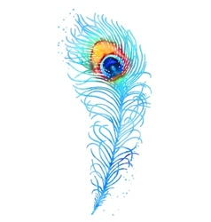 Watercolor peacock feather vector
