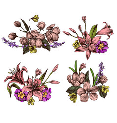 collection hand drawn lilies vector image