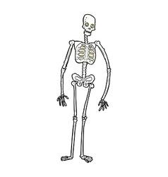 comic cartoon spooky skeleton vector image