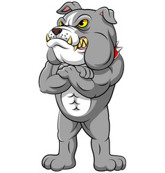 strong bulldog in standing pose vector image