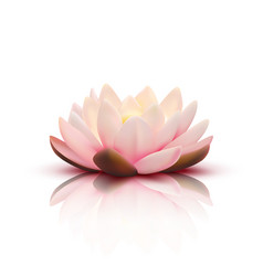 3d flower of lotus vector image vector image