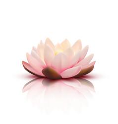 3d flower of lotus vector image