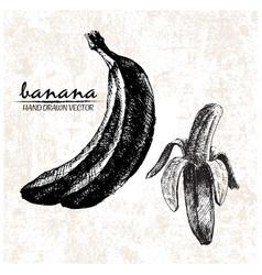 Digital detailed banana hand drawn vector