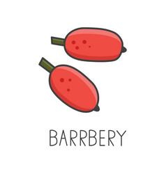 barberry line cooking vector image