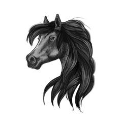 Black arabian horse head symbol vector image