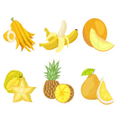 Citron and banana melon and carambola fruits set vector