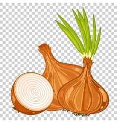 Onion isolated organic food farm food vector