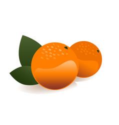 orange fruit vector image