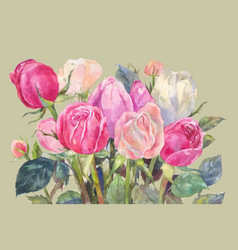 Pink roses watercolor vector